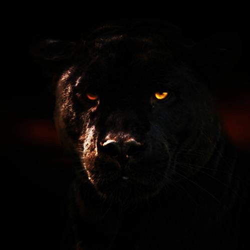 Jaguar (A$AP Rocky Type Beat)