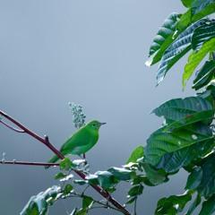 Borneo rainforest - Calm morning at Maliau Basin
