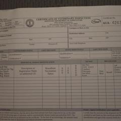 Large Animal Health Certificates