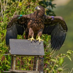 The Way It Is; Gary Tobin on his lucky photo of a White tailed eagle