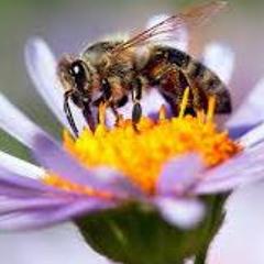 Sweet Honeybee
