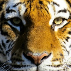 Tiger King - Die traurige Wahrheit