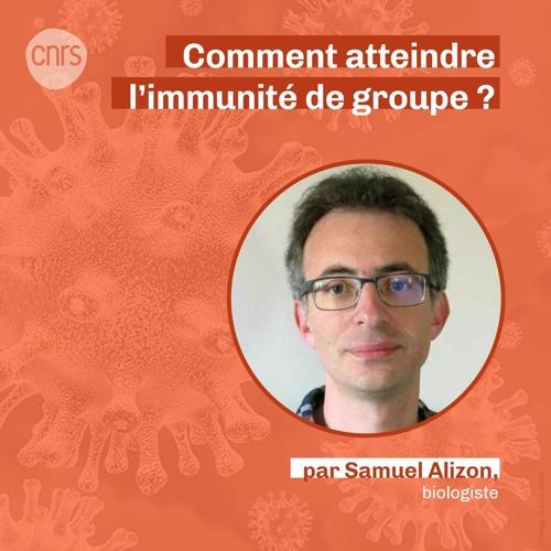 Comment atteindre l'immunité de groupe ? par Samuel Alizon
