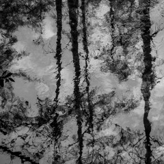 Flooded Forest Echos