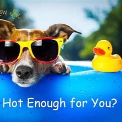 Hot Enough ? __ robert babicz