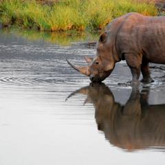 African Wildlife At Waterhole