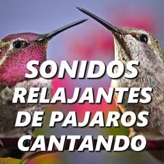 Sonido de Aves