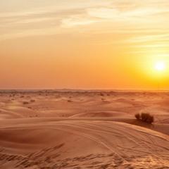 Desert World - ( Prod. by Bill Wain )
