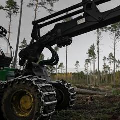 The Final Cut - 15/10/2020 - Makholma Forest