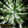 Download Rainforest ft. Ladysmith Black Mambazo Mp3