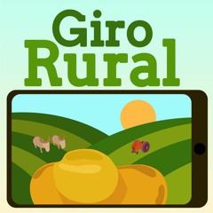 Giro Rural: preço do milho perde força e porco fica mais caro