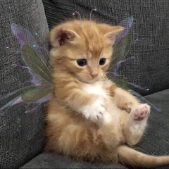 Butterfly- Nevertheless OST