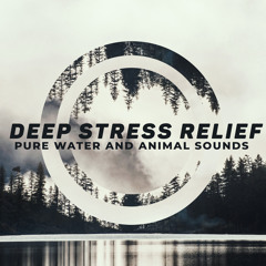 Rest in Stormy Night (feat. Relieve Stress Music Academy)