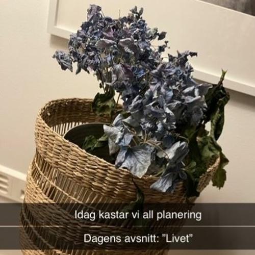 """Dagens avsnitt: """"Livet"""" - Idag kastar vi all planering"""