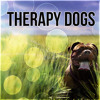 Relaxing Dog Music