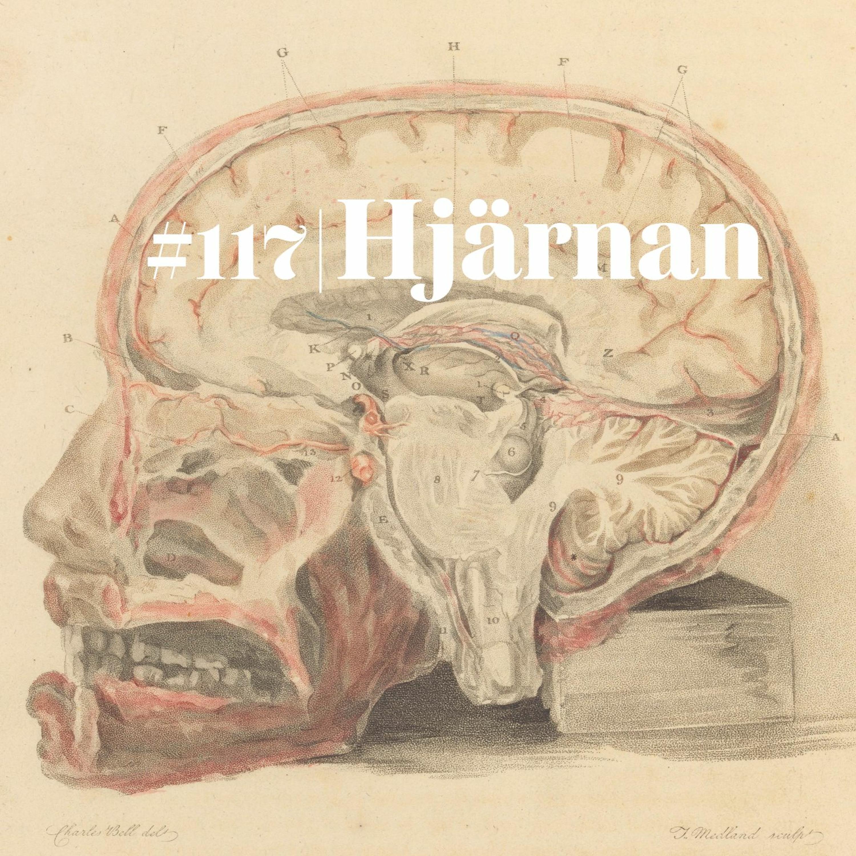 #117 Hjärnan (live)