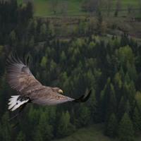 🎶 Freedom  - Roa (No Copyright Songs) 🎶