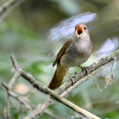 Nightingale by trainline 27 May 2020