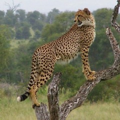 Fit4masafa - The Best Place to Enjoy Our Wildlife Sanctuary