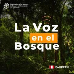 Programa 1: Políticas climáticas y comunidades nativas