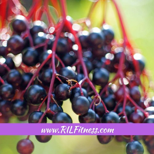 Benefits of Elderberry on Your Immune System! Are You Ready for the Second Wave?