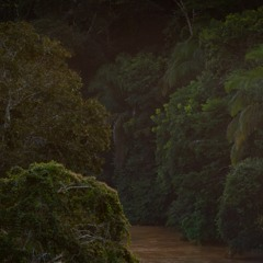 Dusk By The River In The Amazon Rainforest