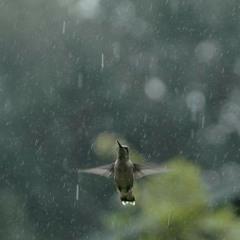 30 minutos de som de chuva