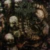 HXNJV - Human Holocaust (feat. IKEMEFUNA)