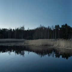 Geese Night - 8/4/2021 - Makholma Shore