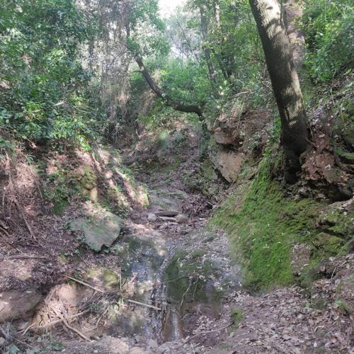 Paisaje Sonoro claro en el bosque Riera Gasulla