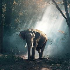 Renki L'Eléphant - Méditation