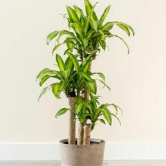 House Plants(quick mix)