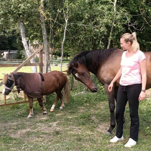Pauline Amisse, la fille qui murmure à l'oreille des chevaux et des Hommes