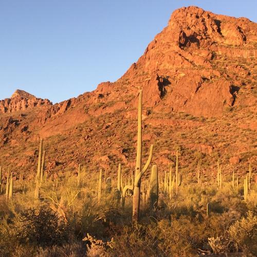 Sonoran Desert Wind Demo