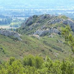 Cicadas - Montagnette, Barbentane