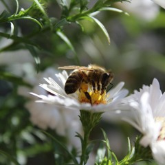 ✿ Alan Watts ✿ Bees And Flowers