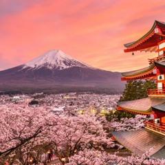 Japanese Cherry Blosom