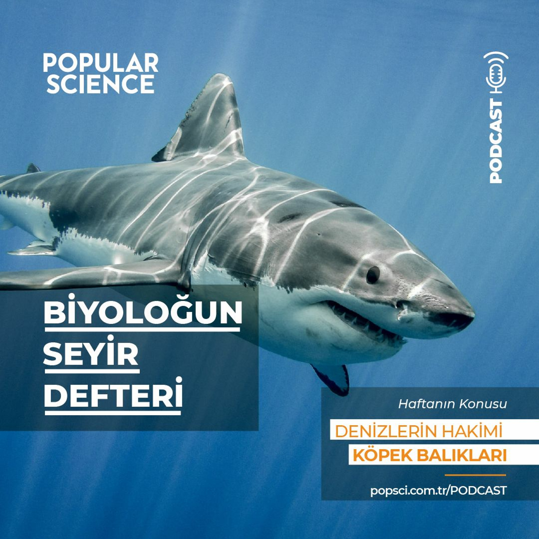 #10 Denizlerin hakimi: Köpek balıkları - Biyoloğun Seyir defteri