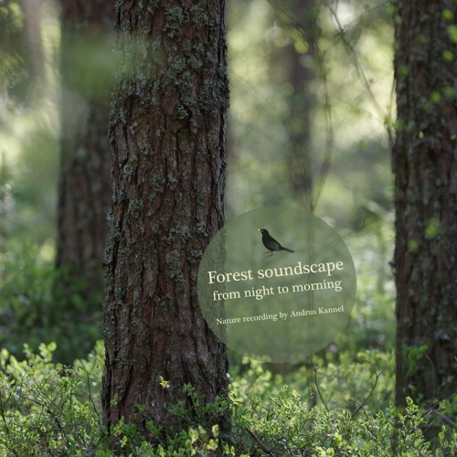 Forest soundscape from night to morning