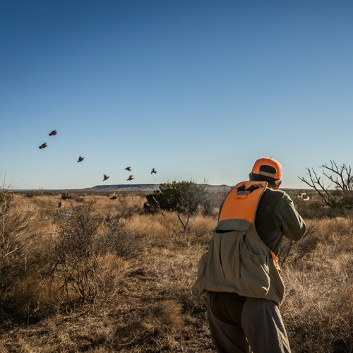 Episode 17: Our Quail Hunting Forecast