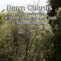 Dawn Chorus 03 - 05 - 20 South Glasgow