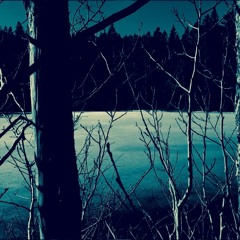 Swedish Eerie Nocturnal Forest