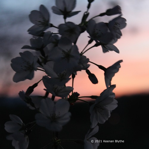 Blossoms In The Breeze Pt. I