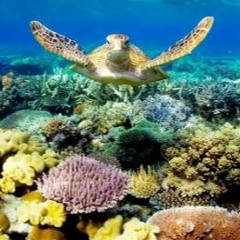 More than just money - What's the Great Barrier Reef worth?