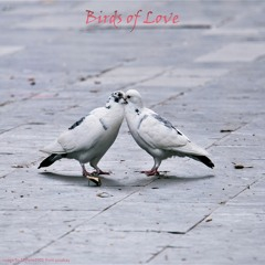 Birds of Love