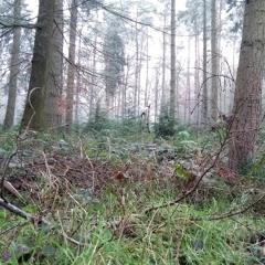 Bagley Wood Winter Corvid Roost
