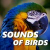 Jungle Bird Sounds