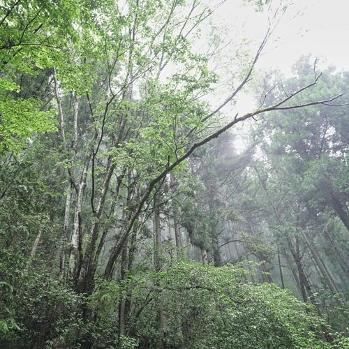 爽やかな雨の森  Short