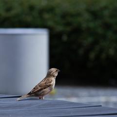 Soundbite : Bird Song