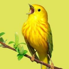 Dirtybird - 033121